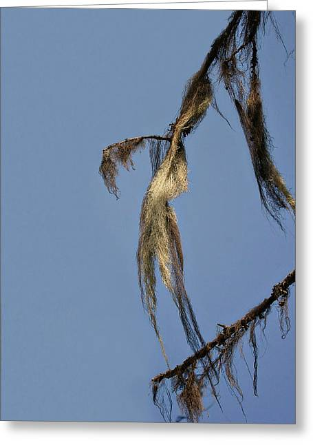 Wind Greeting Cards - Strand of moss swaying gently with the wind - Tiger Mountain WA Greeting Card by Christine Till