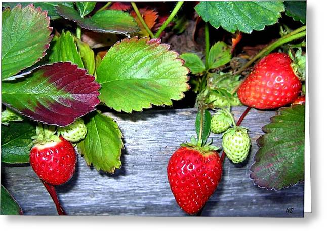 Okanagan Valley Greeting Cards - Strawberries Greeting Card by Will Borden