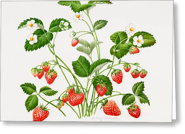 Fresh Green Drawings Greeting Cards - Strawberry plant Greeting Card by Sally Crosthwaite