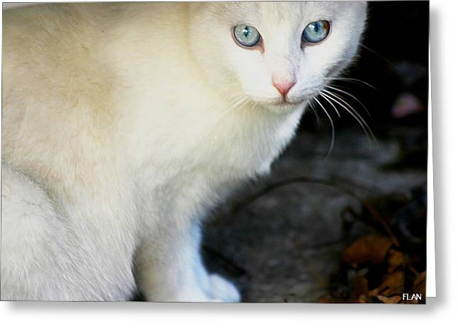 Photos Of Cats Photographs Greeting Cards - Stray Cat 2 Greeting Card by Ruben  Flanagan