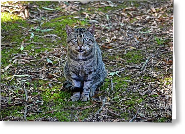 Stray Cat Greeting Card by JW Hanley