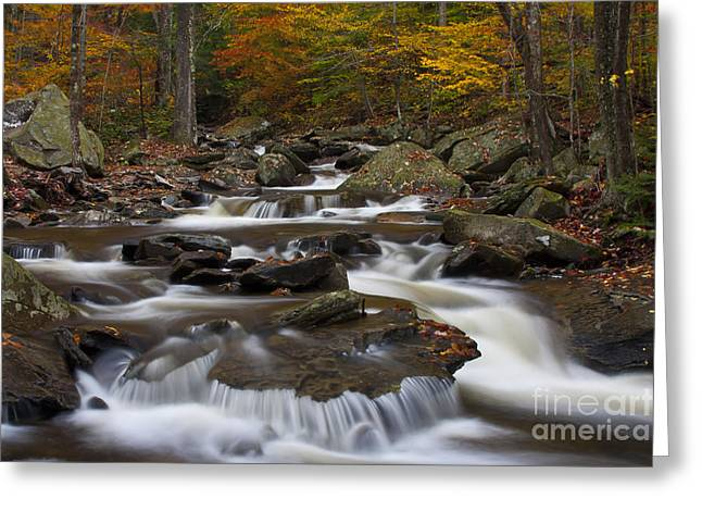 Empty Greeting Cards - Stream At Ricketts Glen Greeting Card by Robert Wirth