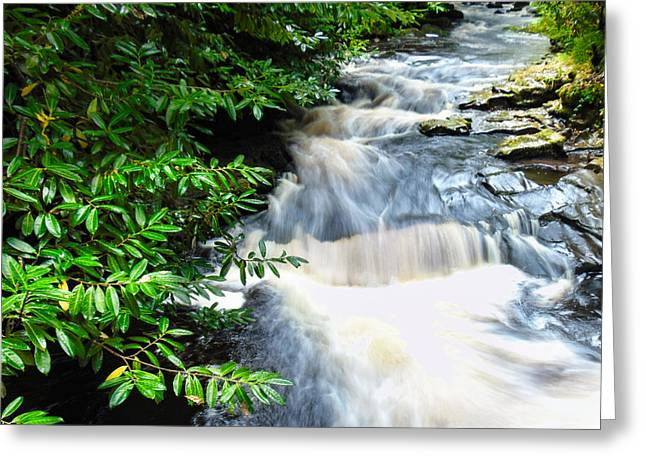 Woodland Scenes Greeting Cards - Stream Greeting Card by Felikss Veilands