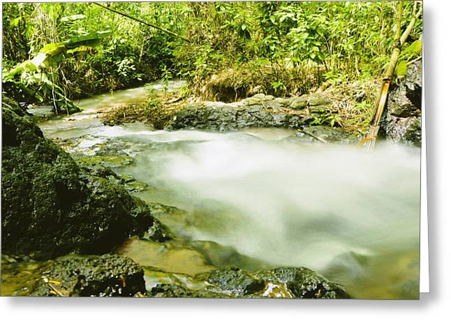 Power Plants Greeting Cards - Stream in Forest Greeting Card by Nguyen Truc