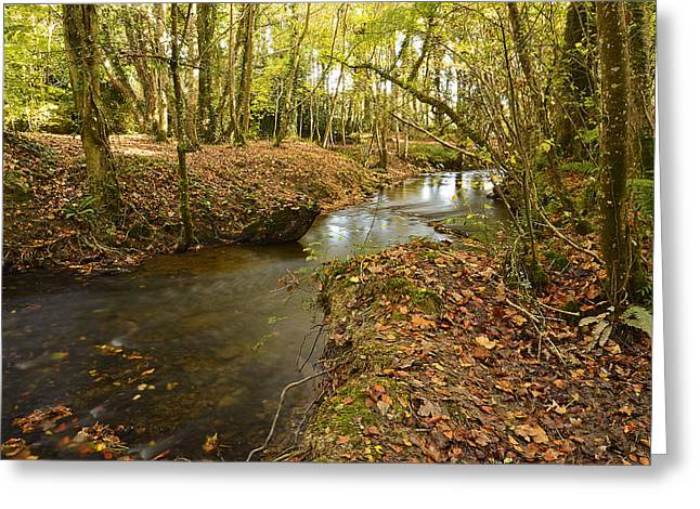 Martina Fagan Greeting Cards - Stream in the Woods Greeting Card by Martina Fagan