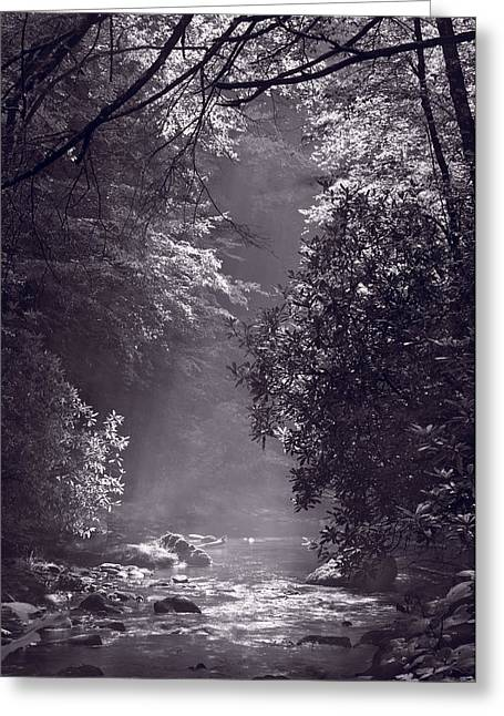 Stream Light B W Greeting Card by Steve Gadomski
