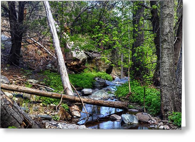 Mayers Creek Greeting Cards - Stream Line through Nature Greeting Card by Thomas  Todd