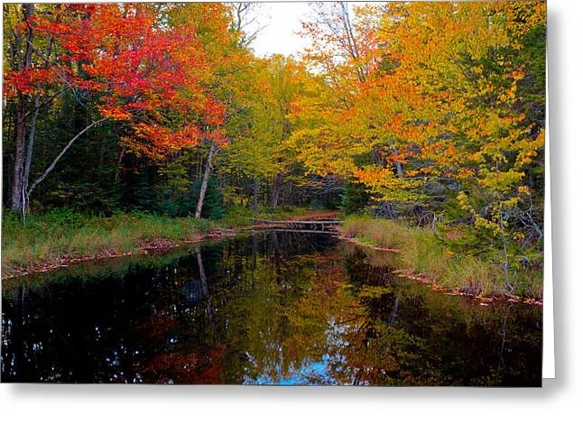 Stream Greeting Cards - Stream Through the Golf Course Greeting Card by David Patterson