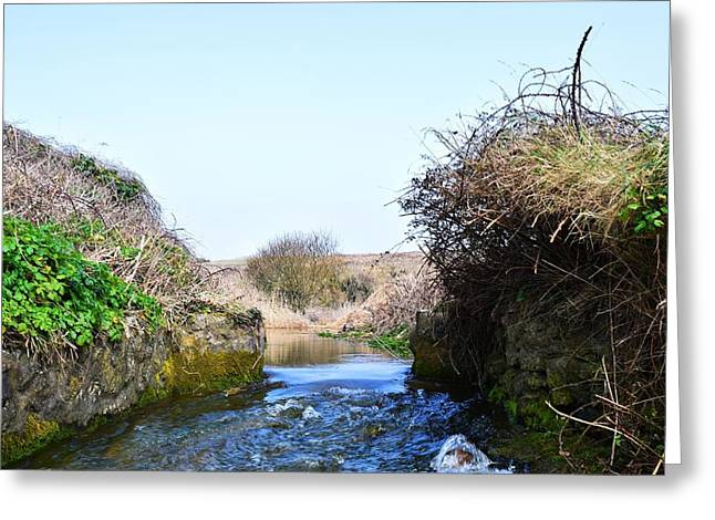 Day Lilly Greeting Cards - Stream to the Sea 6 Greeting Card by David G Bevan
