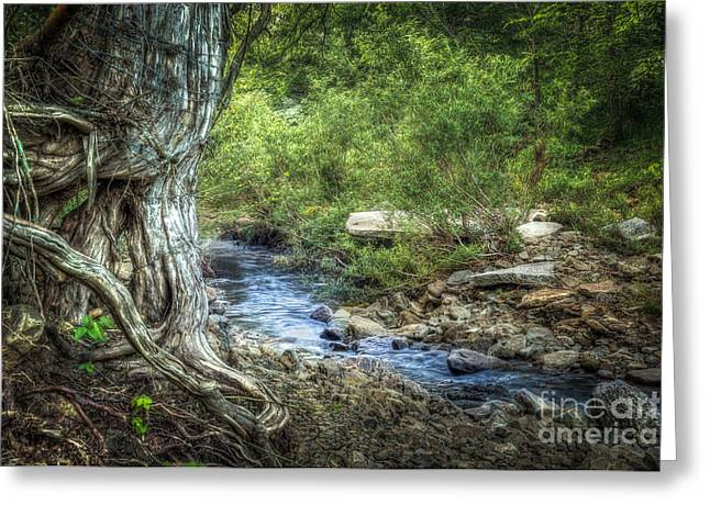 Tree Roots Greeting Cards - Streaming Greeting Card by Larry McMahon