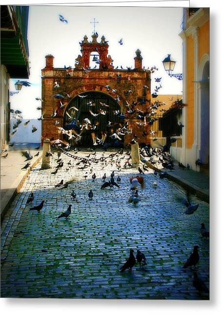 San Juan Puerto Rico Greeting Cards - Street Pigeons Greeting Card by Perry Webster