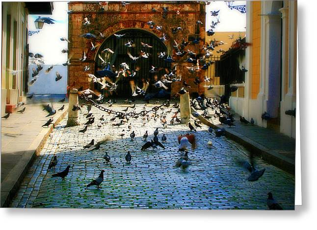 Street Pigeons Greeting Card by Perry Webster