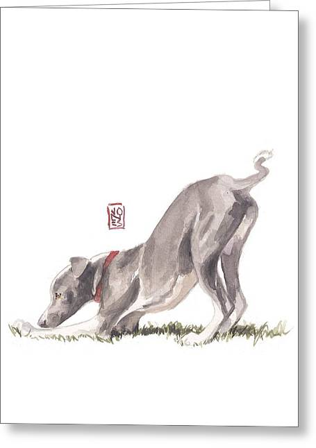 Greyhound Dog Greeting Cards - Stretching Italian Greeting Card by Debra Jones