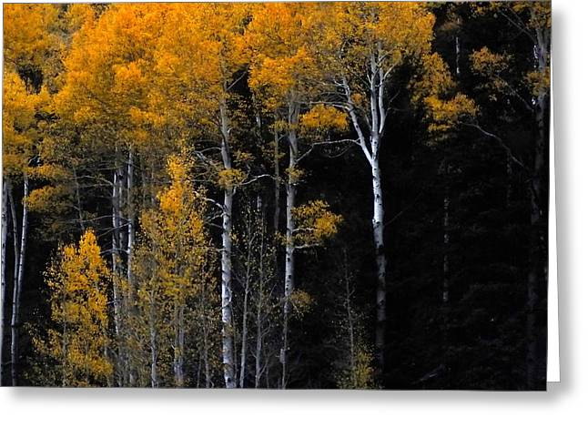 Fall Trees Greeting Cards - Striking Gold Greeting Card by Charlotte Schafer