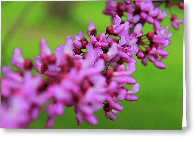 Macro Greeting Cards - String of Purple Greeting Card by Scott Hovind