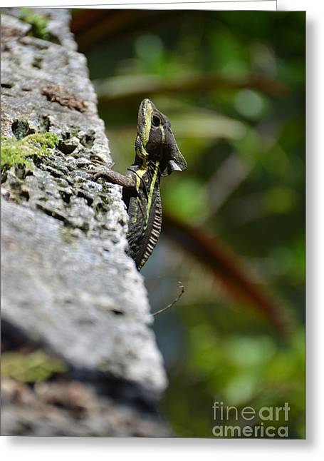 Striped Tapestries - Textiles Greeting Cards - Striped Basilisk Lizard II Greeting Card by Edna Weber