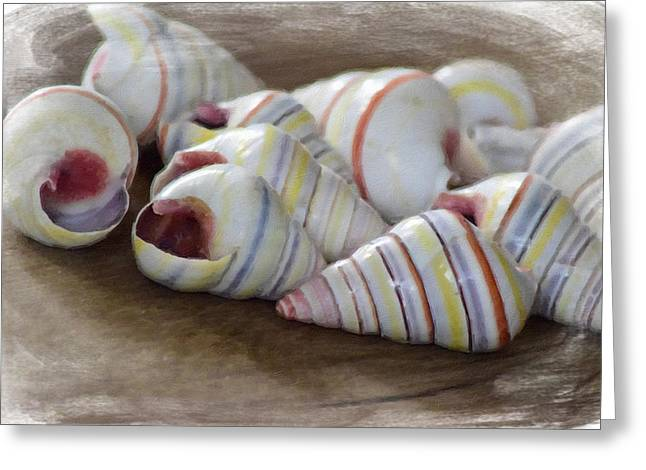 Fine Mixed Media Greeting Cards - Striped Shells Greeting Card by Bonnie Bruno