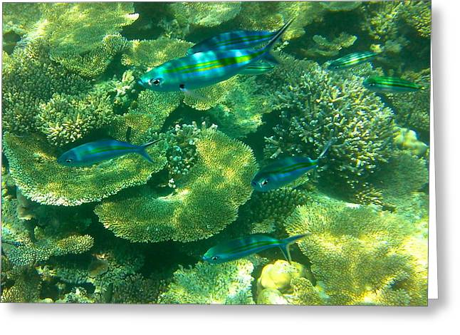 Scuba Diving Greeting Cards - Stripes Greeting Card by Corinne Rhode