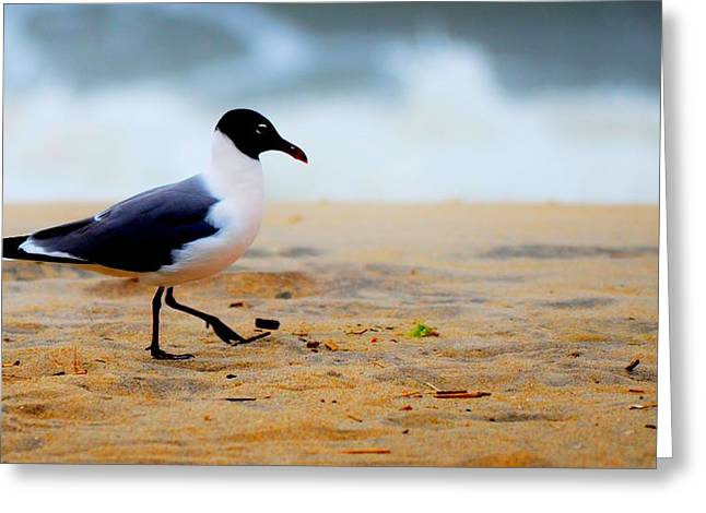 Flying Seagull Greeting Cards - Stroll Greeting Card by Russell Bonovitch