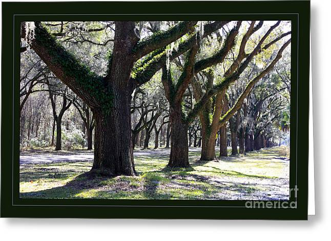 Moss Green Greeting Cards - Strong and Proud in the South with Border Greeting Card by Carol Groenen