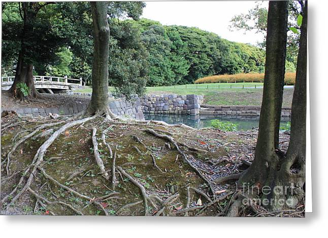 Tree Roots Photographs Greeting Cards - Strong Roots in Japan Greeting Card by Carol Groenen
