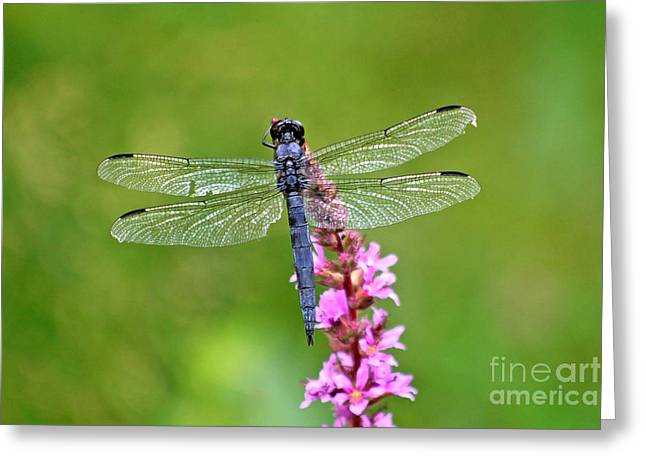 Flying Animal Greeting Cards - Strong Wings Greeting Card by Marle Nopardi