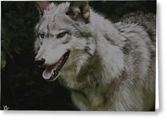 Wolf From The Forest Greeting Cards - Strong Wolf Greeting Card by Debra     Vatalaro