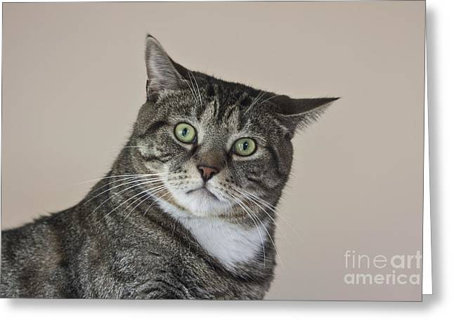 Moggy Greeting Cards - Stroppy Cat Greeting Card by Terri  Waters