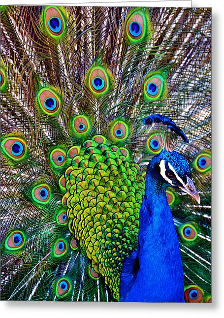 Strut Greeting Cards - Strut Greeting Card by Angelina Vick