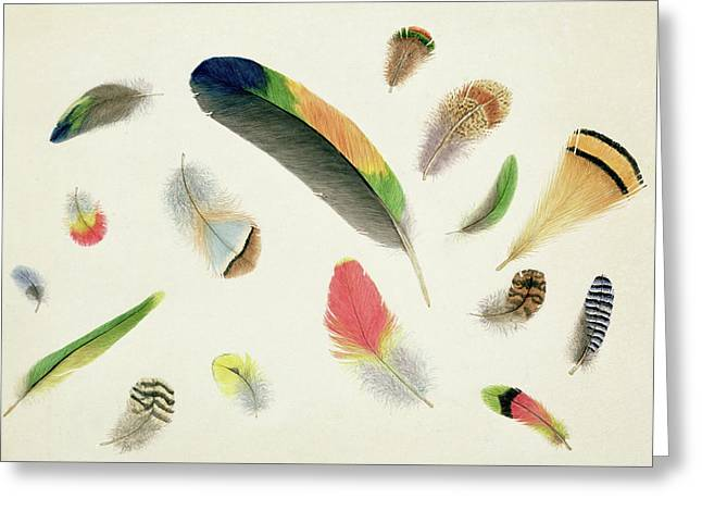 Studies Of Feathers Greeting Card by Anne Bowen