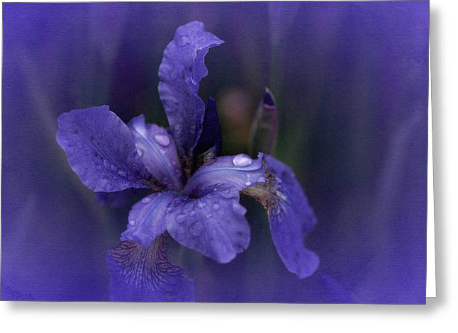 Enhanced Greeting Cards - Study in Blue Greeting Card by Richard Cummings