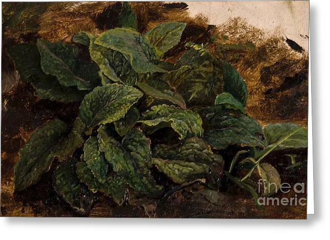 Study Of Leaves Greeting Card by John Middleton