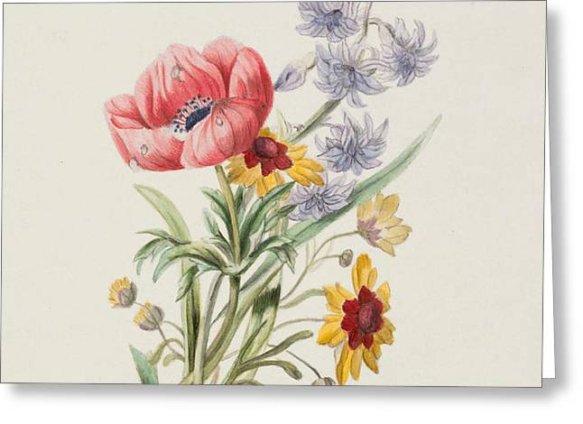Study of wild flowers Greeting Card by English School