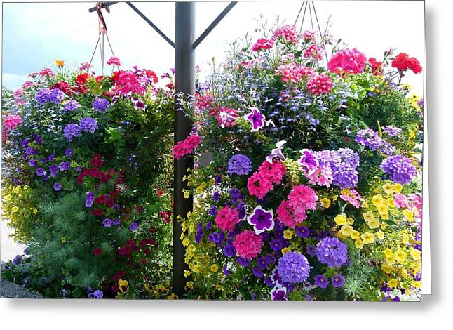 Hanging Baskets Greeting Cards - Stunning Floral Baskets Greeting Card by Will Borden