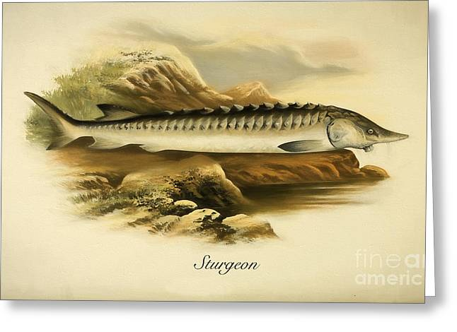 Fresh Food Drawings Greeting Cards - Sturgeon fish Greeting Card by Evgeni Nedelchev