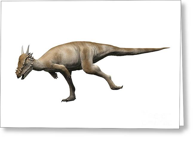 Zoology Greeting Cards - Stygimoloch Is A Pachycephalosaurid Greeting Card by Nobumichi Tamura