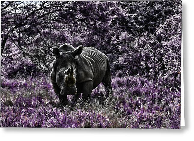 Whit Greeting Cards - Styled Environment-The Modern Trendy Rhino Greeting Card by Douglas Barnard