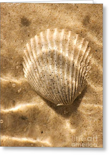 Submerged Shell Greeting Card by Jorgo Photography - Wall Art Gallery