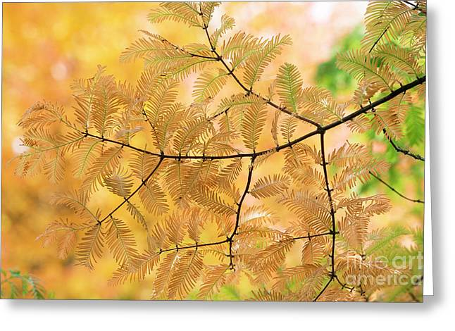 Subtle Shades Of Autumn Greeting Card by Tim Gainey