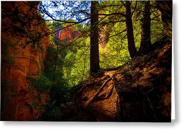 Hiking Greeting Cards - Subway Forest Greeting Card by Chad Dutson