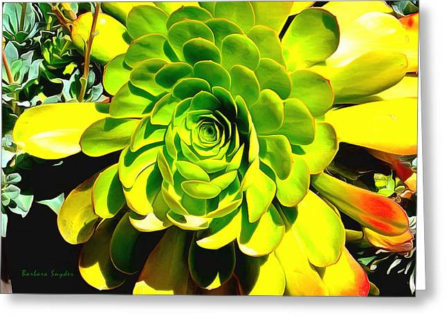 Out Of The Woods Greeting Cards - Succulent Close Up Greeting Card by Barbara Snyder