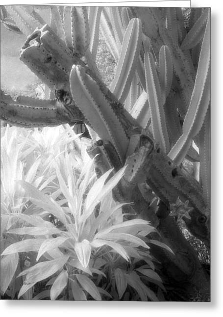 Infrared Photography Greeting Cards - Succulent Delight Greeting Card by Richard Rizzo