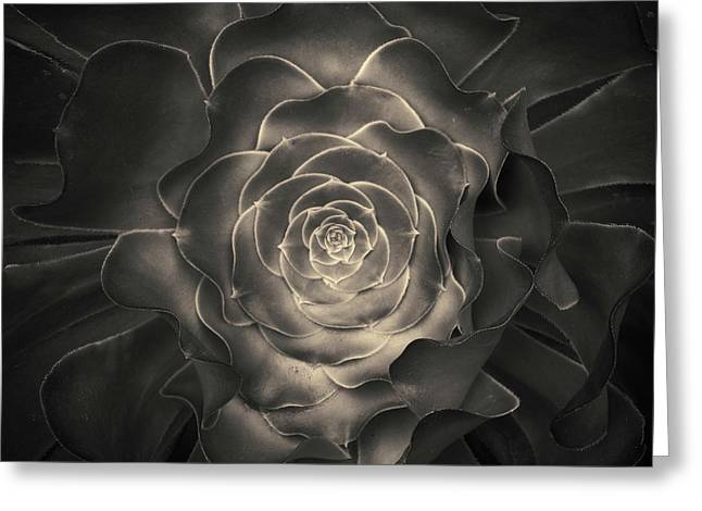Warm Tones Greeting Cards - Succulent I Toned Greeting Card by David Gordon