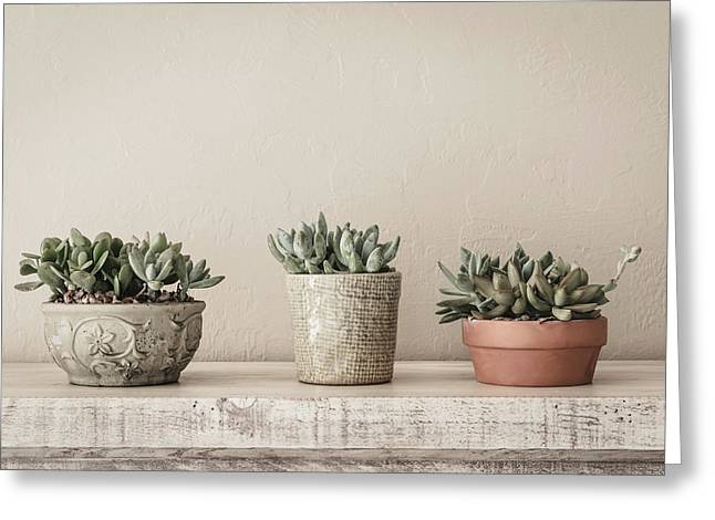 Succulents In Pots Greeting Card by Kim Hojnacki