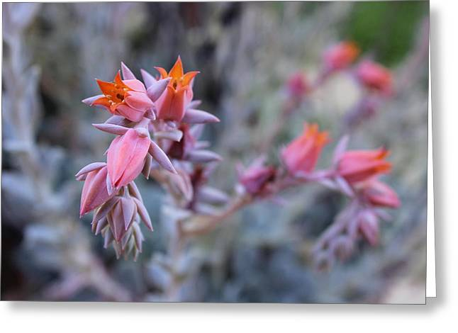 Aperture Greeting Cards - Succulents Greeting Card by Megan  Forsythe