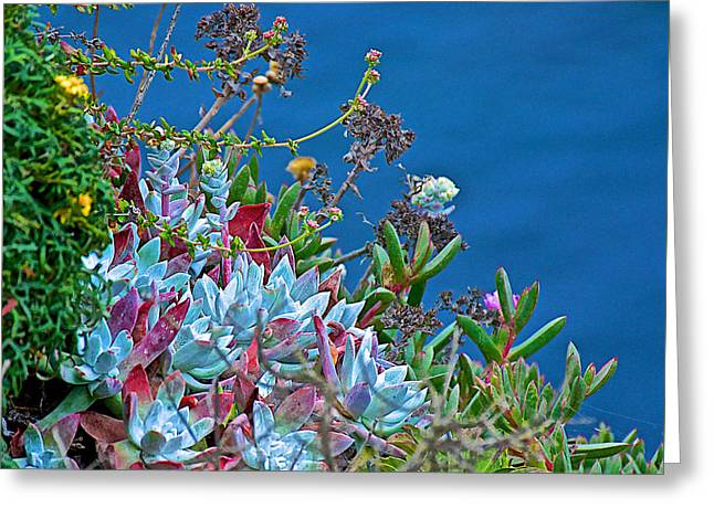 Point Lobos Reserve Greeting Cards - Succulents Over the Pacific Ocean in Point Lobos State Reserve near Monterey-California  Greeting Card by Ruth Hager