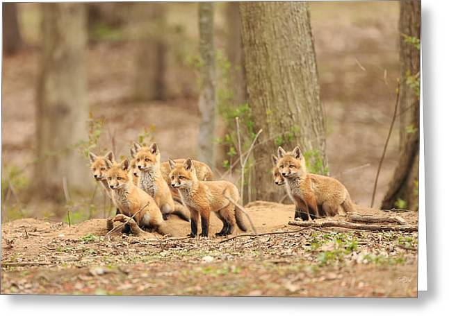 Fox Kit Greeting Cards - Sudden Alert Greeting Card by Everet Regal
