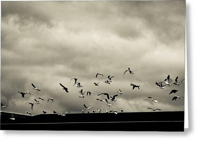 Flying Seagull Greeting Cards - Sudden Flight Greeting Card by Arlene Giddings