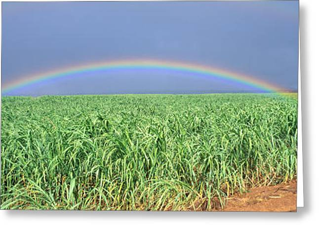 Double Rainbow Greeting Cards - Sugarcane Rainbow Greeting Card by Bill Schildge - Printscapes