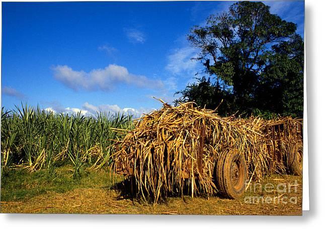 Puerto Rico Greeting Cards - Sugarcane Wagon Greeting Card by Thomas R Fletcher